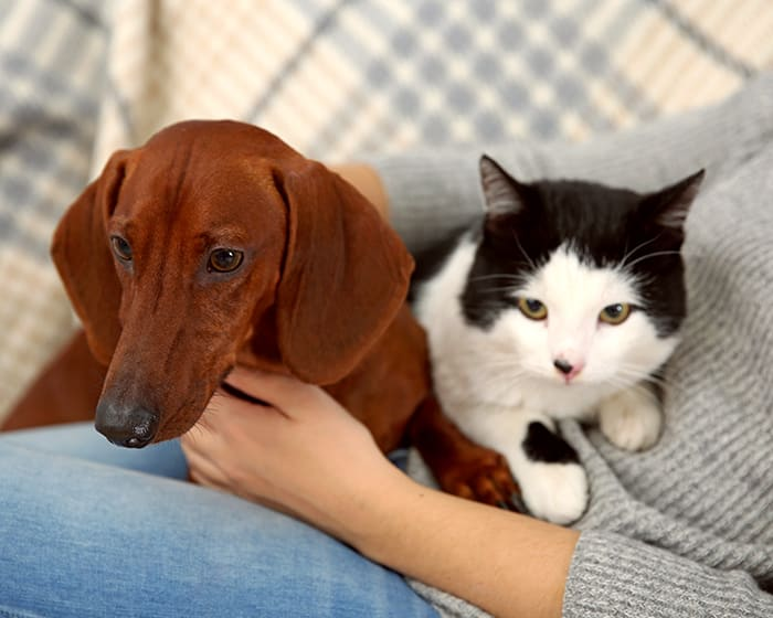Geriatric Care for Pets, Orlando